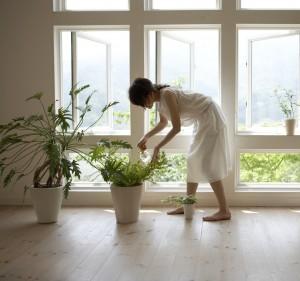 5 plants - crop