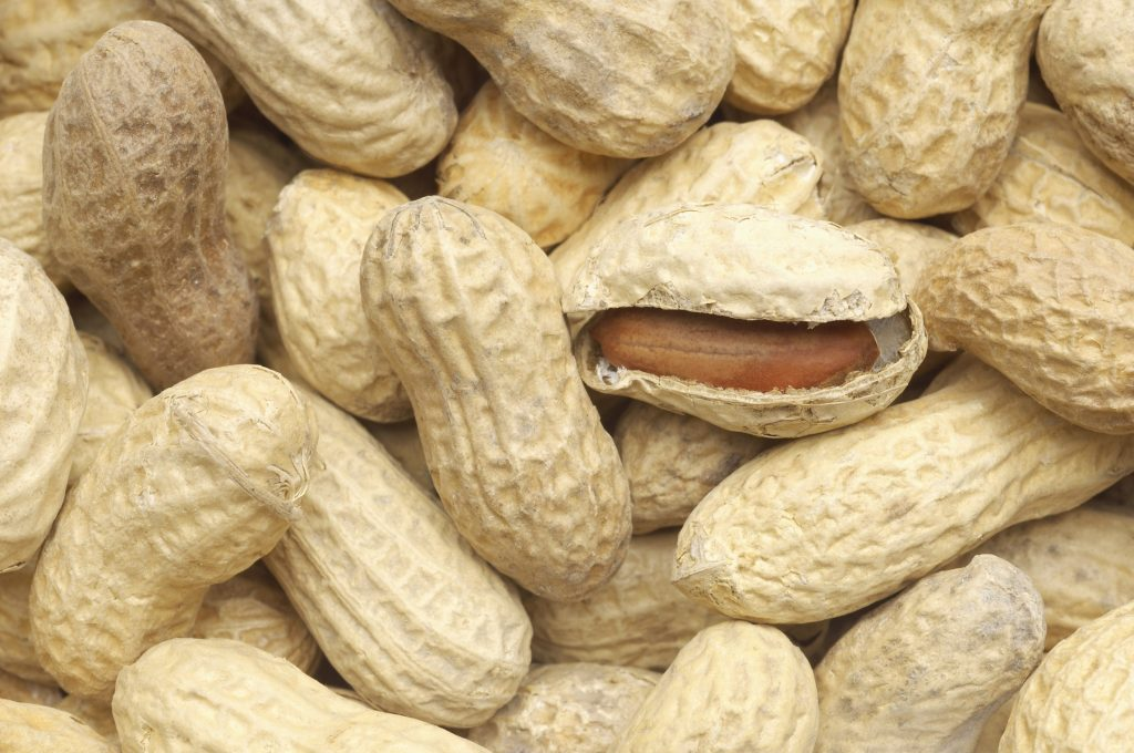Probiotics and OIT Prove a Promising Combo for Peanut Allergy - Allergic Living