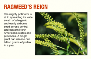 pollen.section.box-ragweed