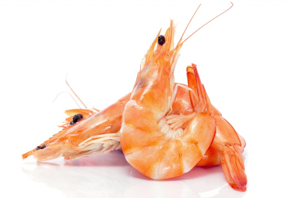 How Can an Adult Develop Shrimp Allergy? - Allergic Living