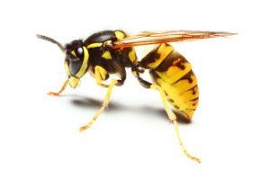 bigstock-Close-up-of-a-live-Yellow-Jack-16866644