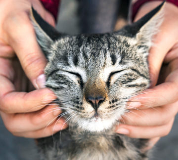 Cat getting it's face rubbed.
